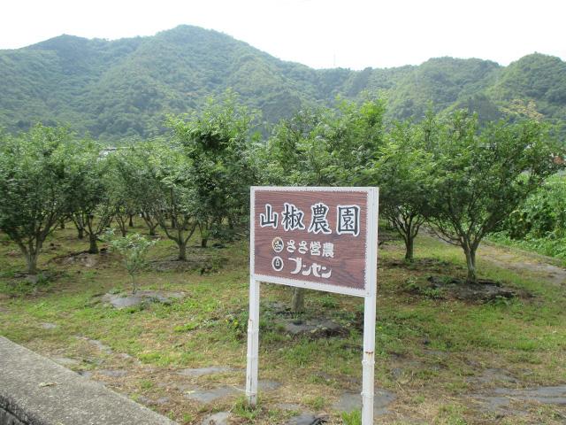 収穫IMG_3360